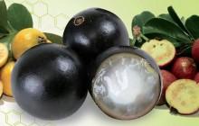 Revista-dos-Vegetarianos83